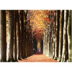 The European beech alley